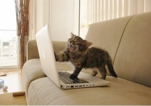 Photo cred: http://www.distractify.netdna-cdn.com/wp-content/uploads//2014/03//angry-writer-cat.jpg